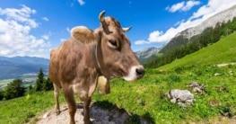 Klima Schweiz, beste Reisezeit Schweiz