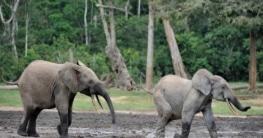 Klima Zentralafrikanische Republik