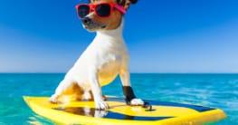 Entspannter Urlaub mit Hund - Unsere Tipps