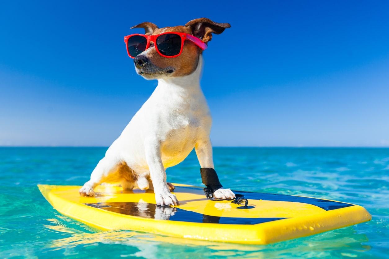 Reisen mit Hund