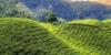 Klima Sri Lanka, Beste Reisezeit Sri Lanka